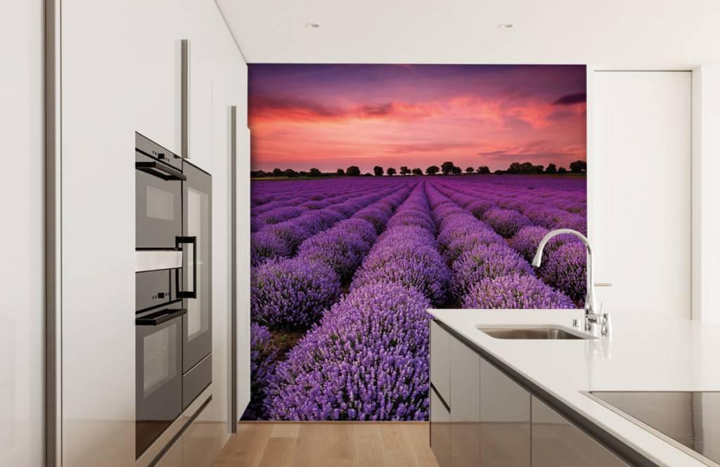 Blumenfelder - Lavendelfeld - Schlafzimmer 3
