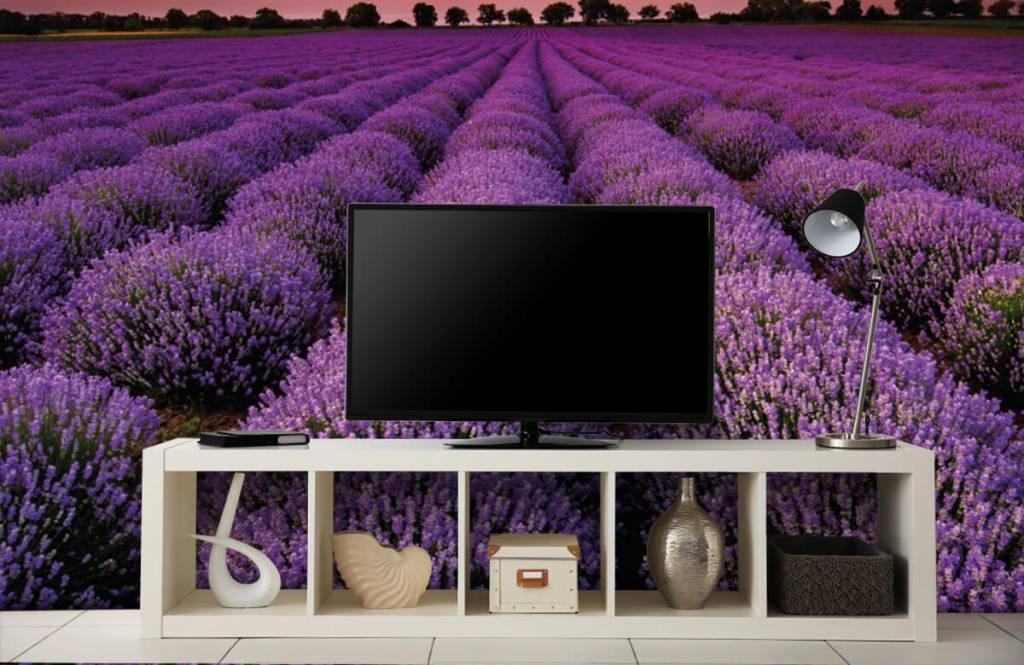 Blumenfelder - Lavendelfeld - Schlafzimmer 4
