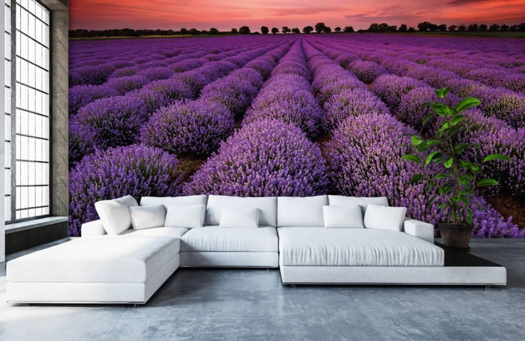 Blumenfelder - Lavendelfeld - Schlafzimmer 5