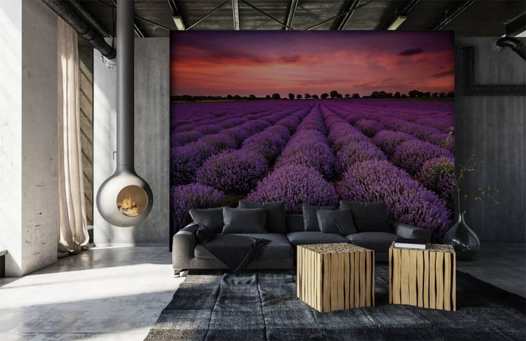 Blumenfelder - Lavendelfeld - Schlafzimmer 6