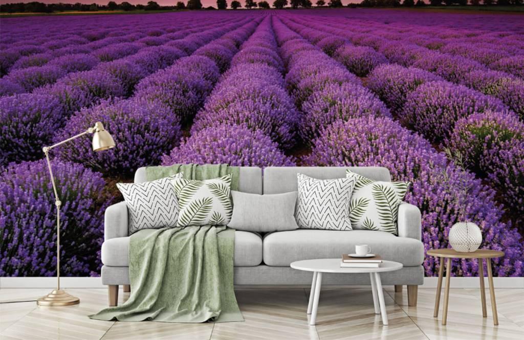 Blumenfelder - Lavendelfeld - Schlafzimmer 7