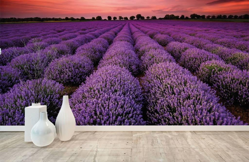Blumenfelder - Lavendelfeld - Schlafzimmer 8