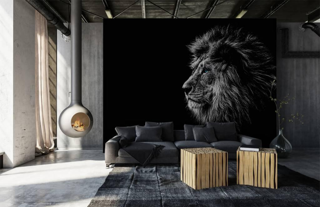 Safari-Tiere - Löwe mit blauen Augen - Jugendzimmer 1