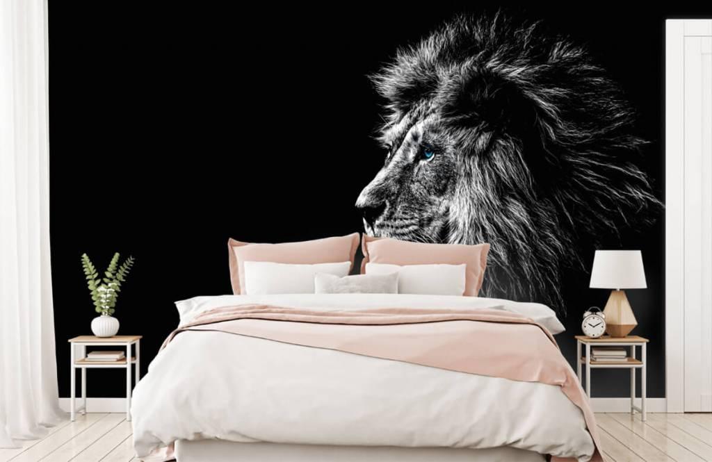 Safari-Tiere - Löwe mit blauen Augen - Jugendzimmer 2