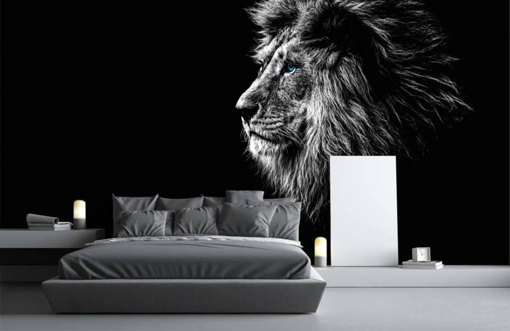 Safari-Tiere - Löwe mit blauen Augen - Jugendzimmer 3