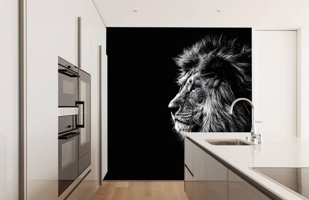 Safari-Tiere - Löwe mit blauen Augen - Jugendzimmer 4