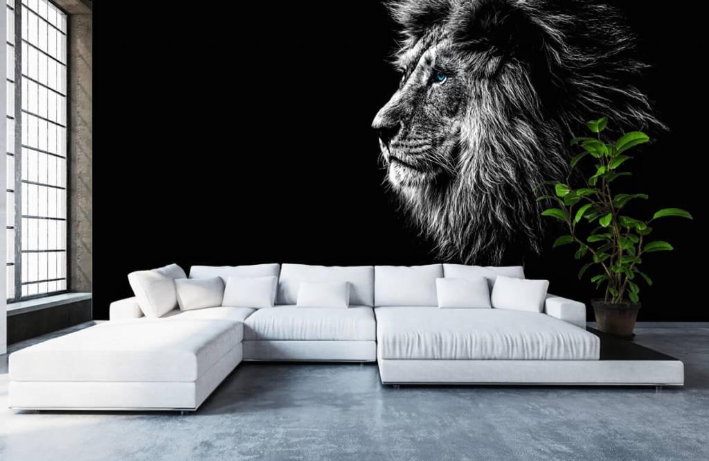Safari-Tiere - Löwe mit blauen Augen - Jugendzimmer 6