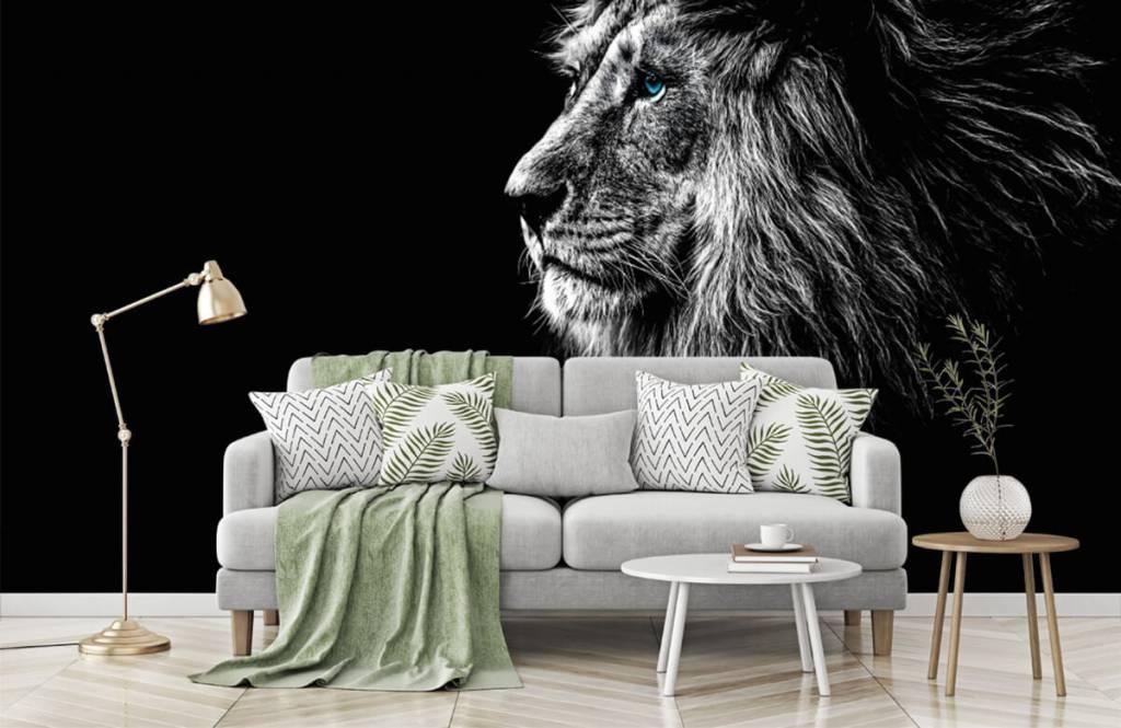 Safari-Tiere - Löwe mit blauen Augen - Jugendzimmer 7