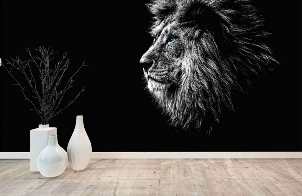 Safari-Tiere - Löwe mit blauen Augen - Jugendzimmer 8
