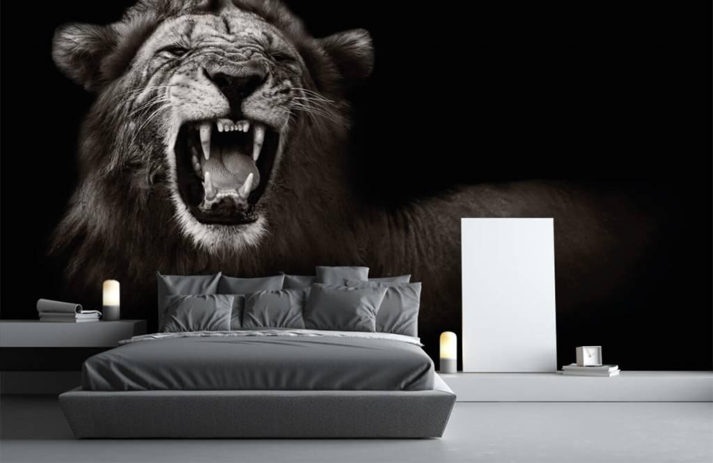 Wilde Tiere - Löwin - Jugendzimmer 3