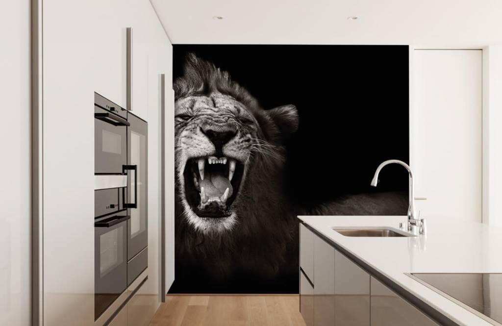 Wilde Tiere - Löwin - Jugendzimmer 4