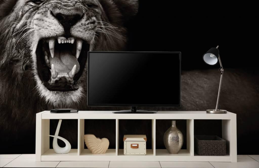 Wilde Tiere - Löwin - Jugendzimmer 5