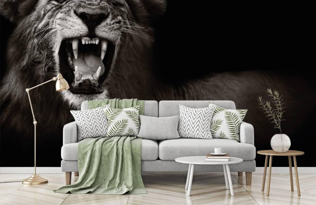 Wilde Tiere - Löwin - Jugendzimmer 7
