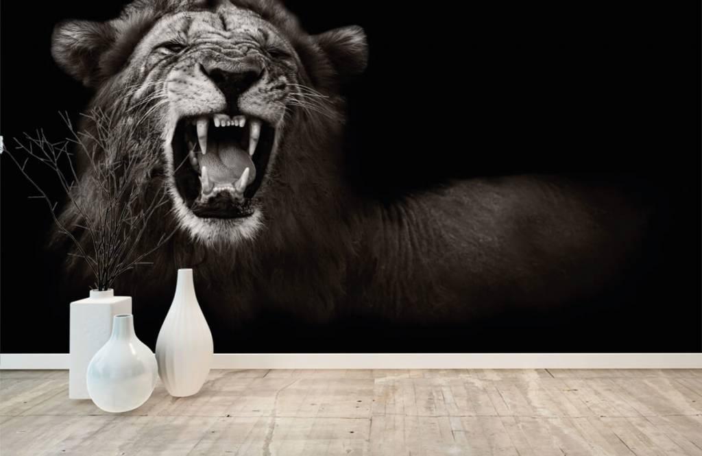 Wilde Tiere - Löwin - Jugendzimmer 8