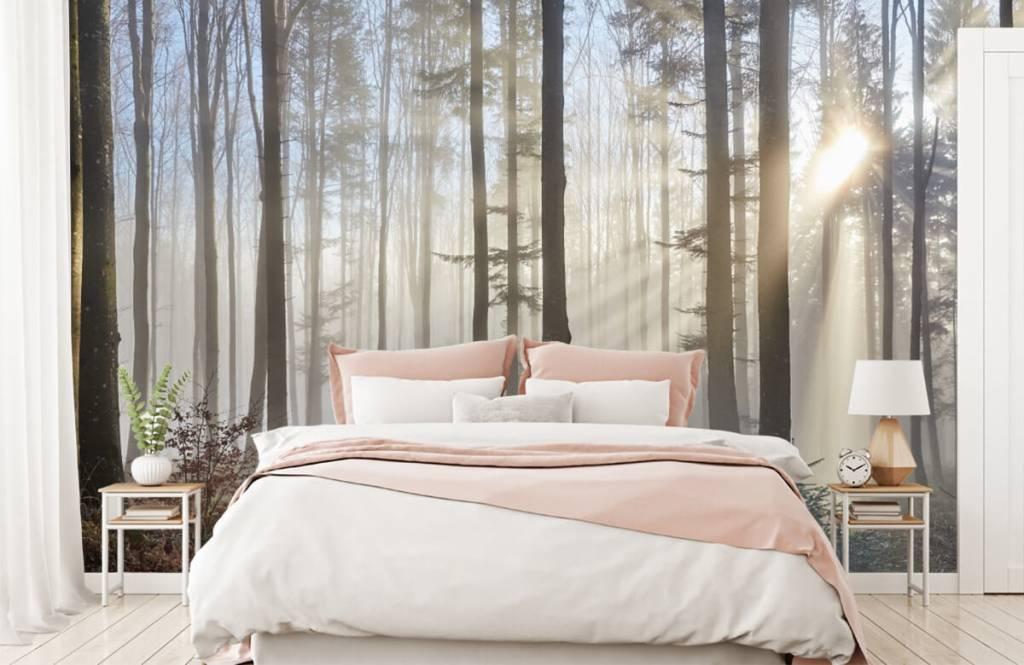Wald Tapete - Nebliger Wald - Schlafzimmer 1