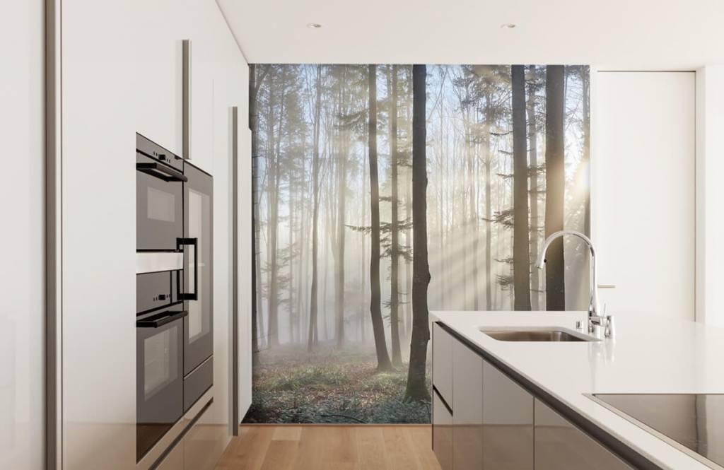 Wald Tapete - Nebliger Wald - Schlafzimmer 2