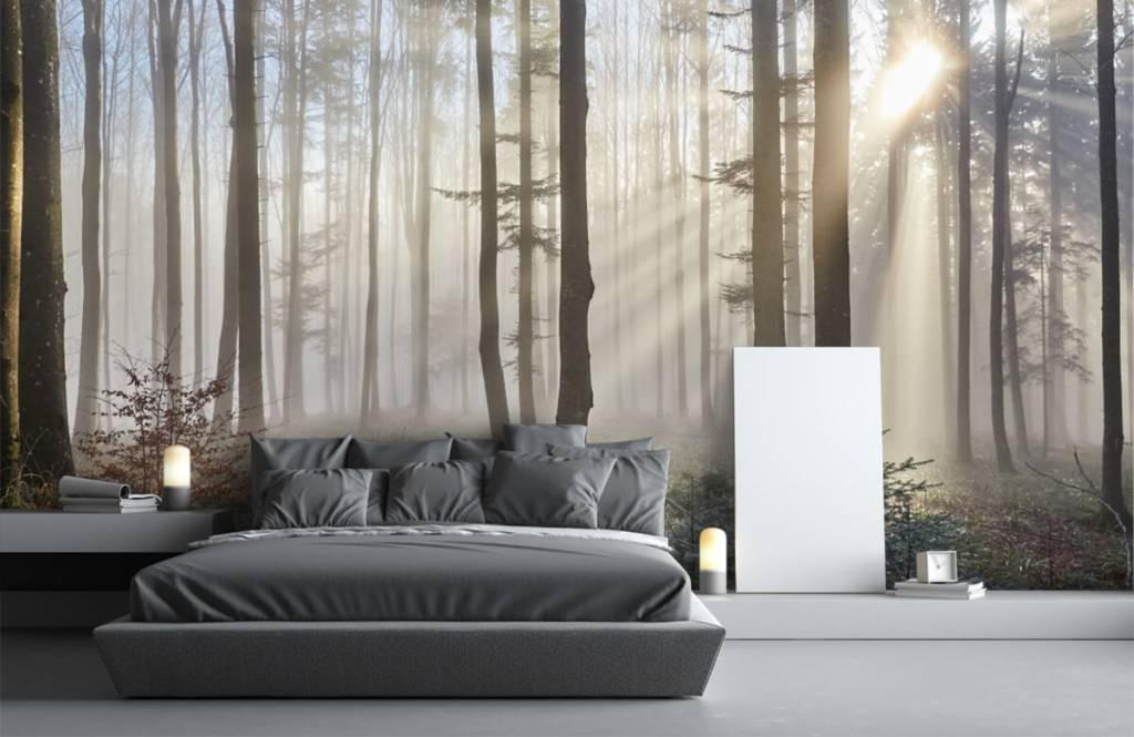 Wald Tapete - Nebliger Wald - Schlafzimmer 3