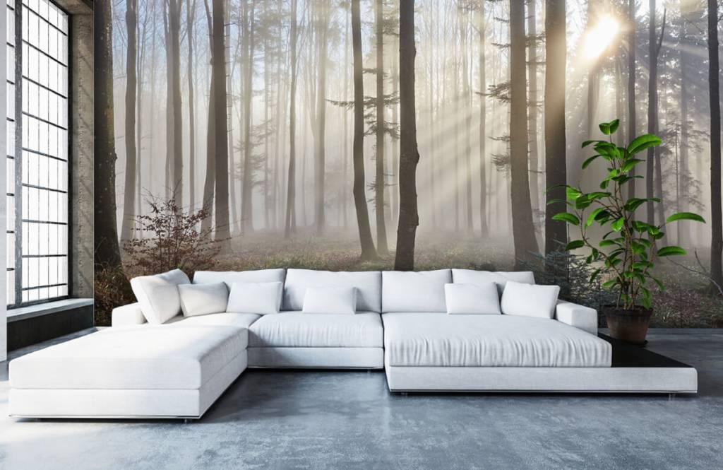 Wald Tapete - Nebliger Wald - Schlafzimmer 5