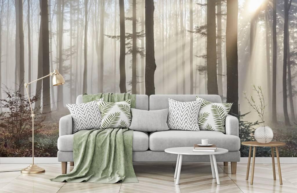Wald Tapete - Nebliger Wald - Schlafzimmer 7