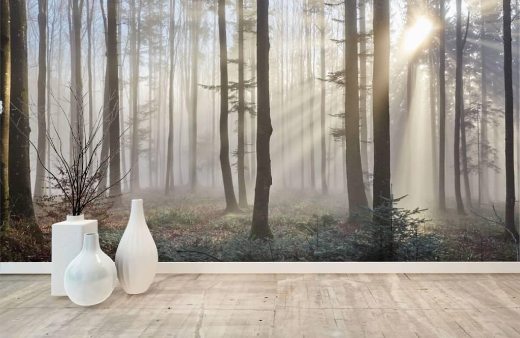 Wald Tapete - Nebliger Wald - Schlafzimmer 8