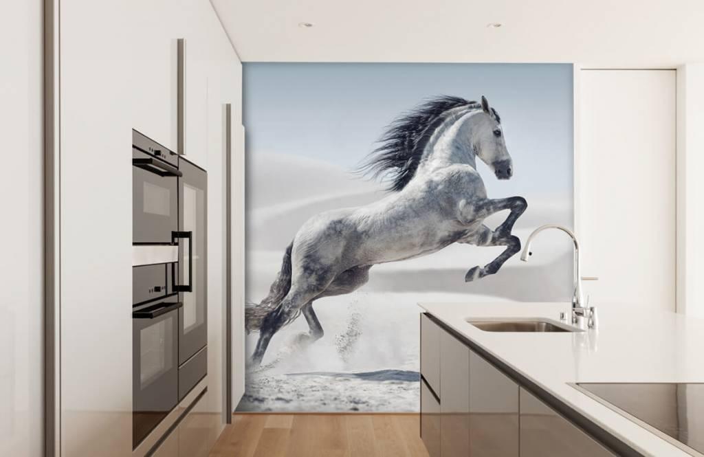 Pferde - Tanzendes Pferd - Kinderzimmer 5