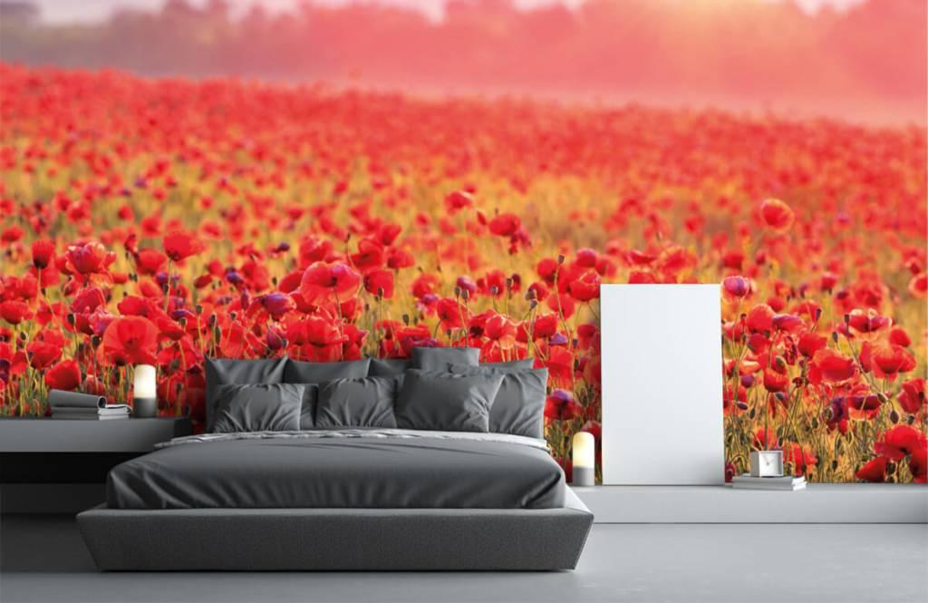 Blumenfelder - Feld mit Mohnblumen - Schlafzimmer 1