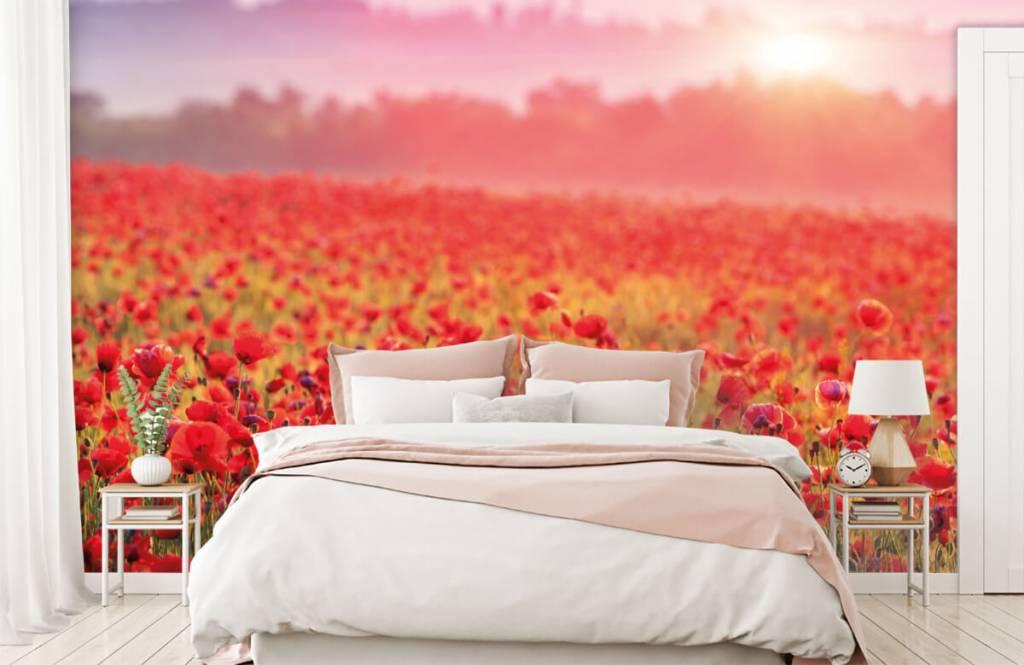 Blumenfelder - Feld mit Mohnblumen - Schlafzimmer 2