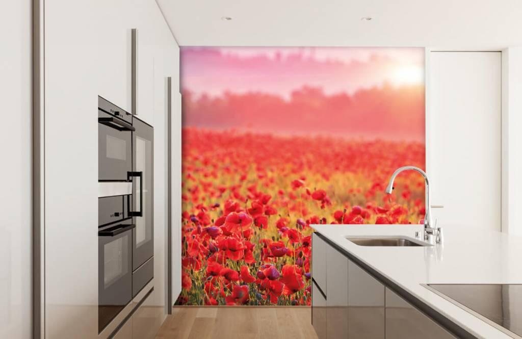 Blumenfelder - Feld mit Mohnblumen - Schlafzimmer 3