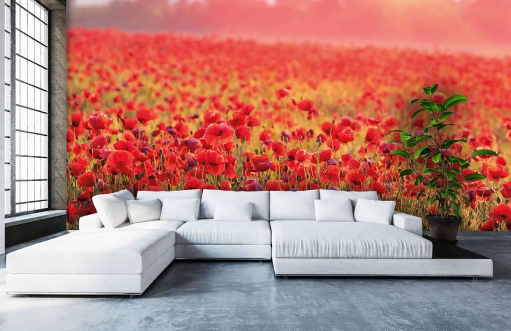 Blumenfelder - Feld mit Mohnblumen - Schlafzimmer 5