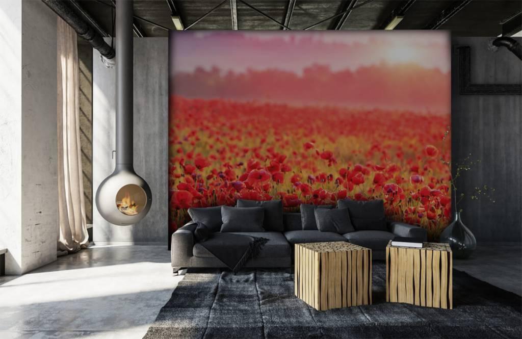 Blumenfelder - Feld mit Mohnblumen - Schlafzimmer 6