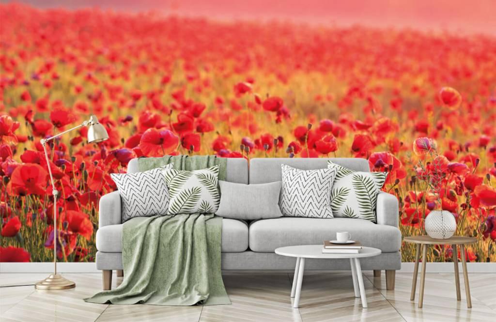 Blumenfelder - Feld mit Mohnblumen - Schlafzimmer 7