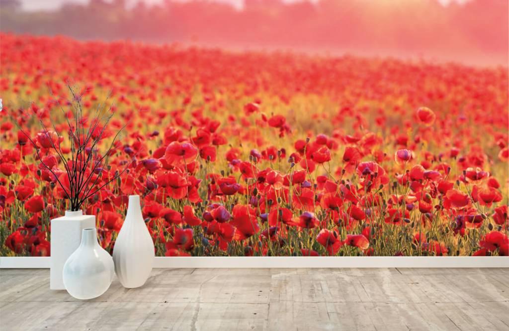 Blumenfelder - Feld mit Mohnblumen - Schlafzimmer 8