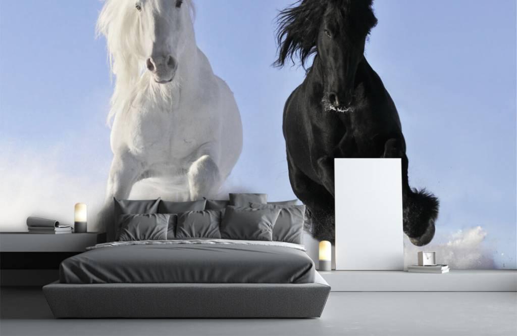Pferde - Schwarzweiss-Pferde - Jugendzimmer 3