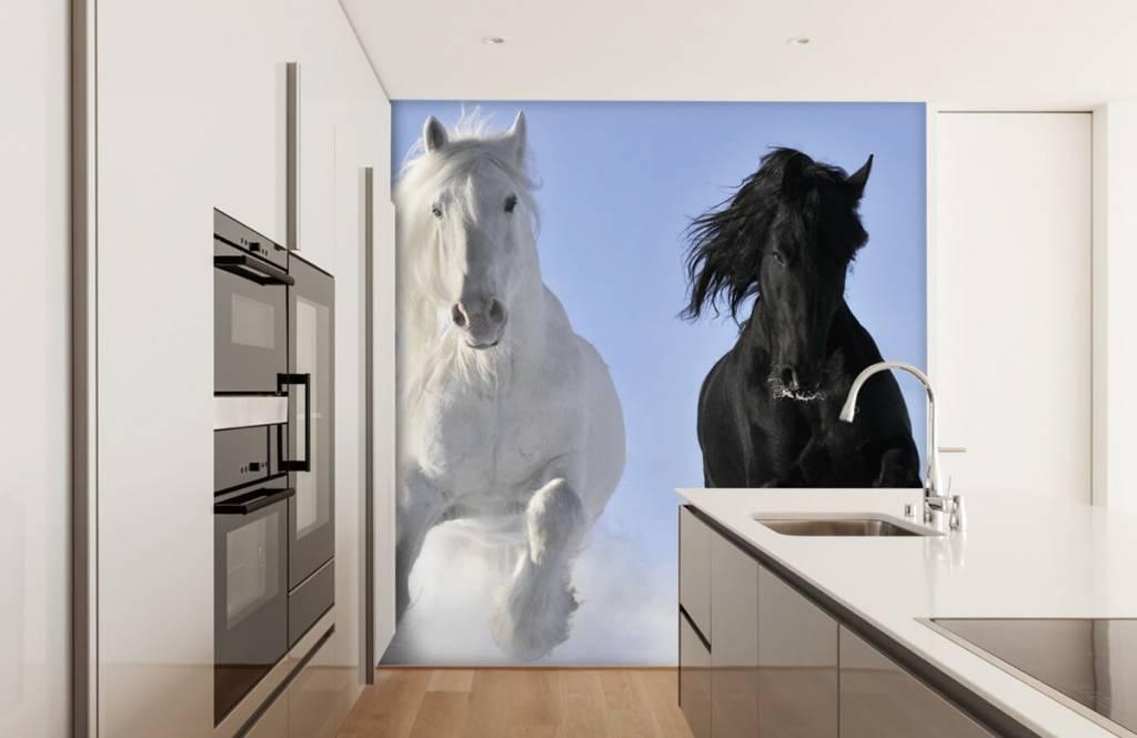 Pferde - Schwarzweiss-Pferde - Jugendzimmer 4