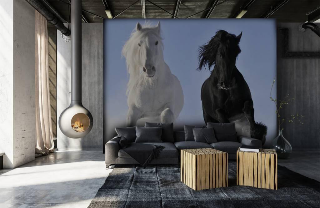 Pferde - Schwarzweiss-Pferde - Jugendzimmer 7