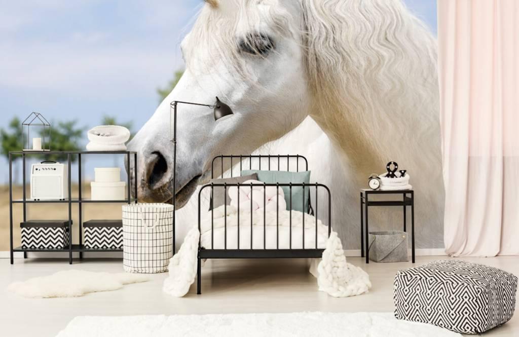 Pferde - Weißes Einhorn - Kinderzimmer 2