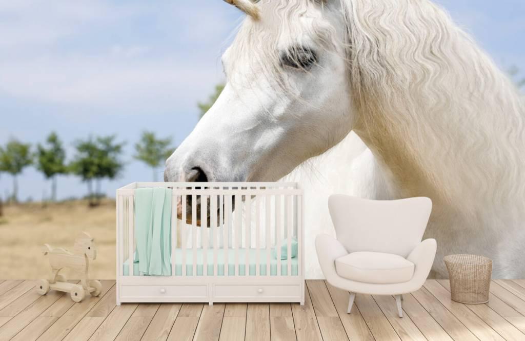 Pferde - Weißes Einhorn - Kinderzimmer 5