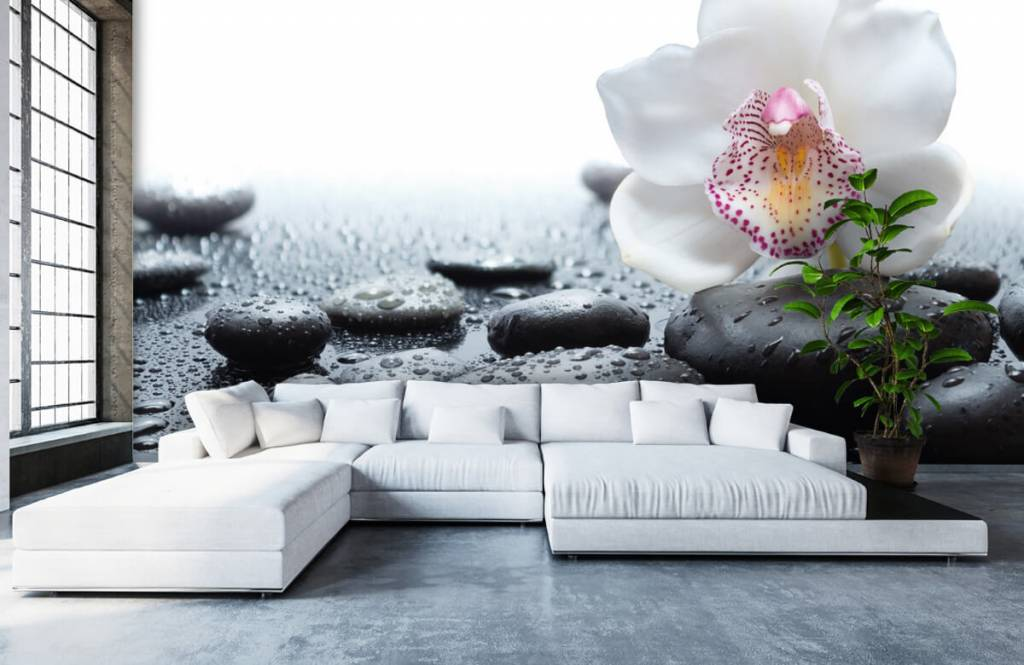 Andere - Weiße Orchidee auf Fototapete - Empfangsbereich 1