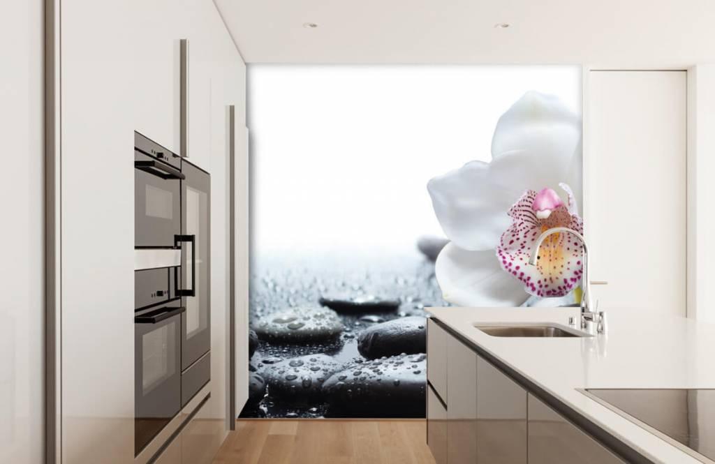 Andere - Weiße Orchidee auf Fototapete - Empfangsbereich 4