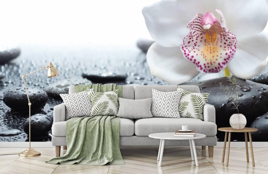 Andere - Weiße Orchidee auf Fototapete - Empfangsbereich 7