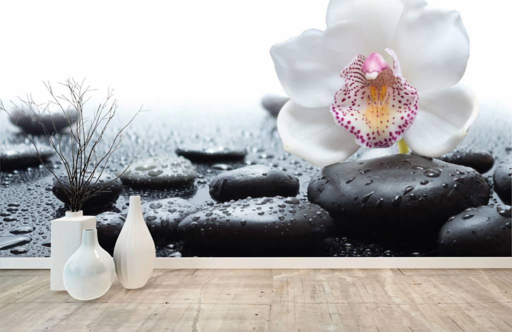Andere - Weiße Orchidee auf Fototapete - Empfangsbereich 8