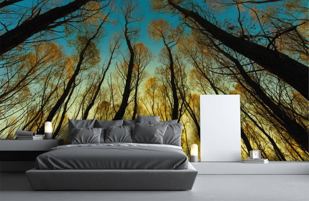 Wald Tapete - Sonnenaufgang zwischen Bäumen - Schlafzimmer 1