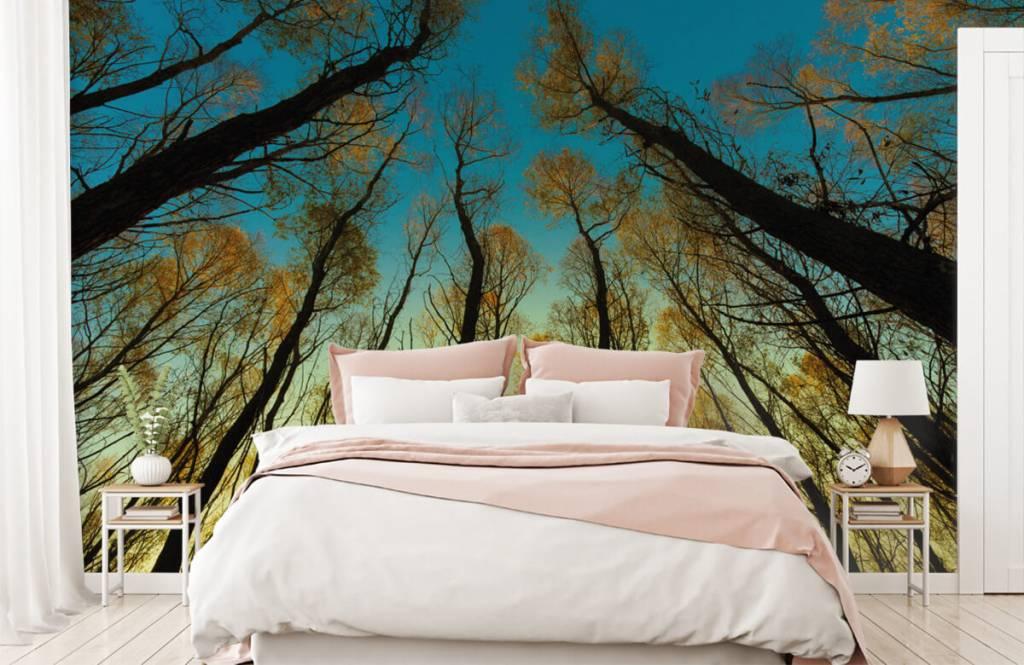 Wald Tapete - Sonnenaufgang zwischen Bäumen - Schlafzimmer 2