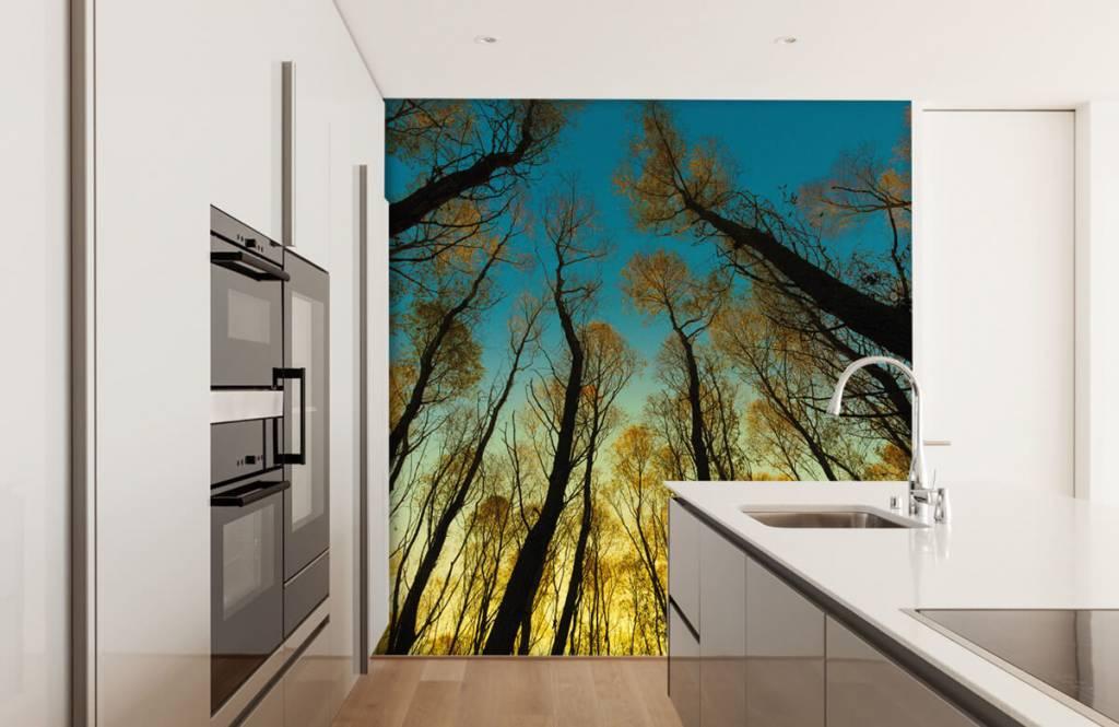 Wald Tapete - Sonnenaufgang zwischen Bäumen - Schlafzimmer 3