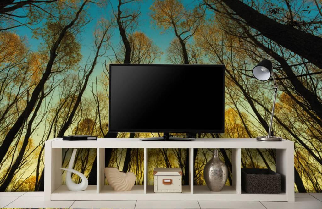 Wald Tapete - Sonnenaufgang zwischen Bäumen - Schlafzimmer 4