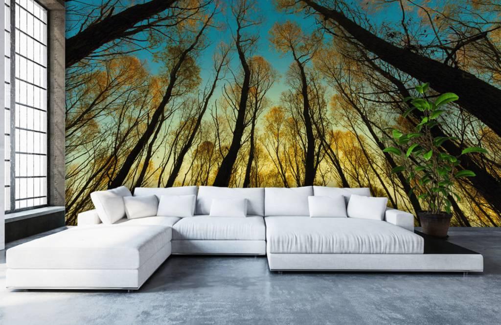 Wald Tapete - Sonnenaufgang zwischen Bäumen - Schlafzimmer 5