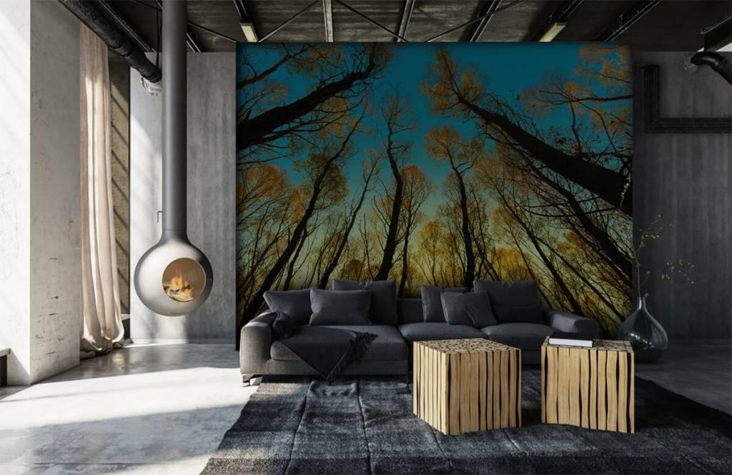 Wald Tapete - Sonnenaufgang zwischen Bäumen - Schlafzimmer 6
