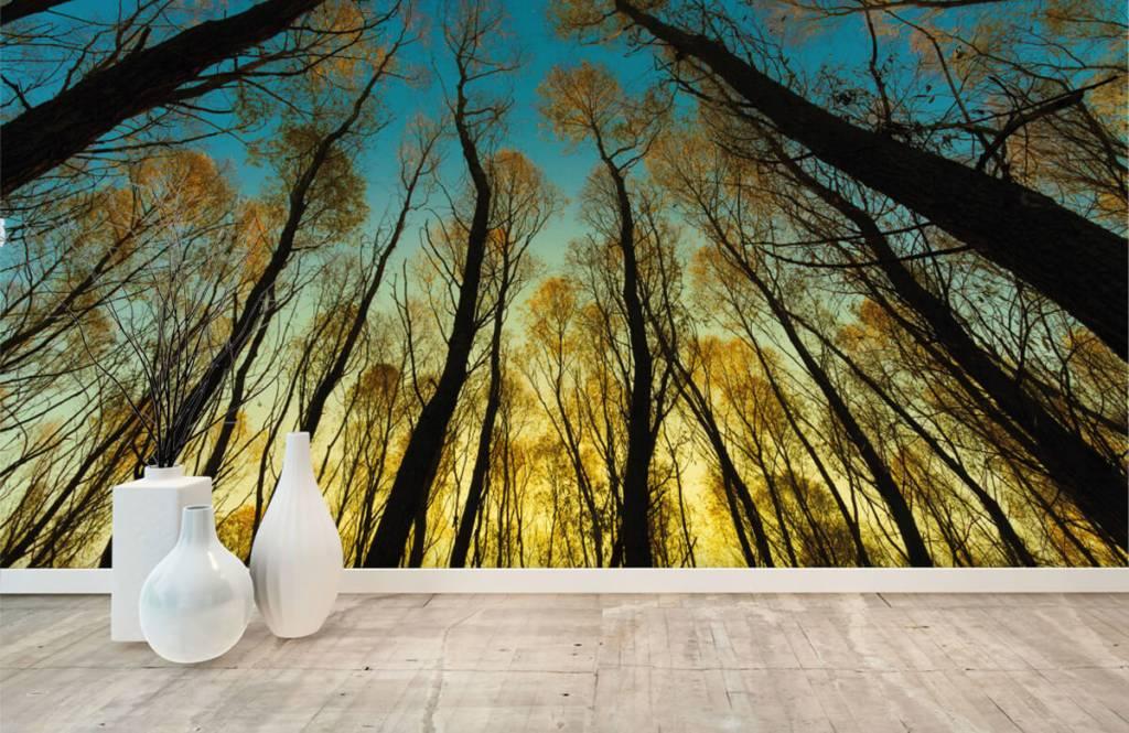 Wald Tapete - Sonnenaufgang zwischen Bäumen - Schlafzimmer 8