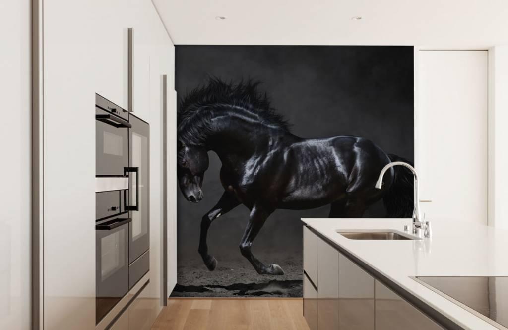 Pferde - Schwarzer Hengst - Kinderzimmer 4