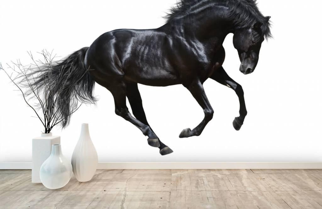 Pferde - Schwarzer Hengst - Kinderzimmer 8